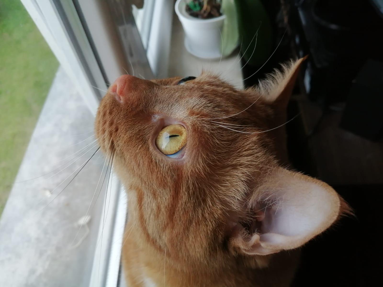 Kot Raduś